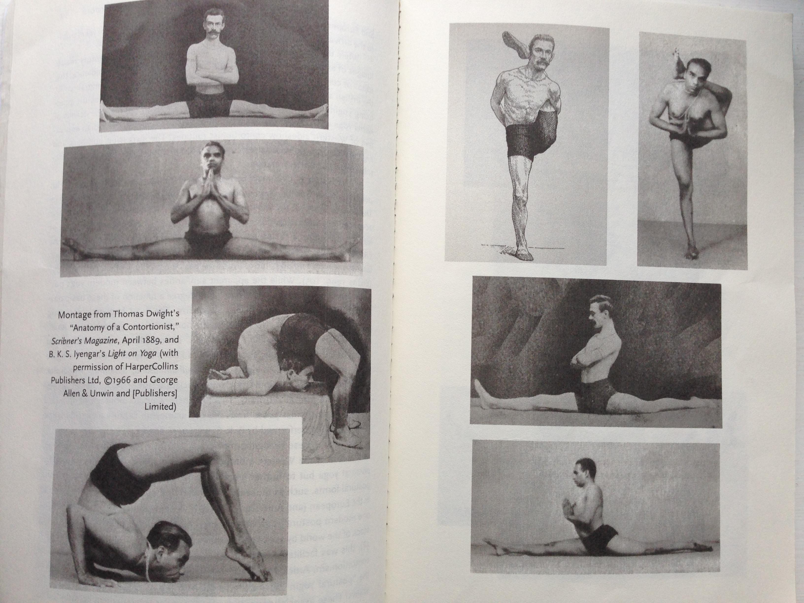 contortionist + bks